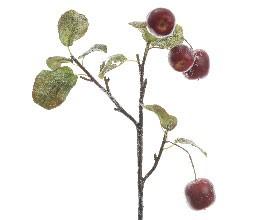 Apfelzweig mit 4 Äpfeln